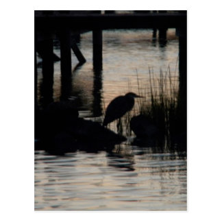 Heron Silhouetted on water at sunset Postcard
