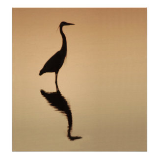 Heron Silouette Poster