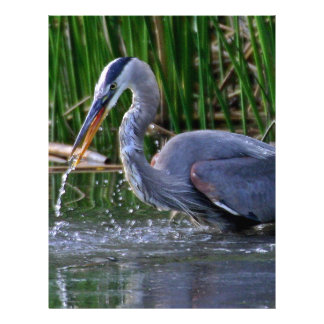 Heron Splash Letterhead