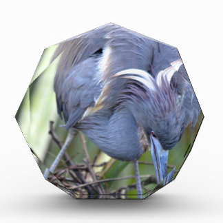 Heron Strengthening Her Nest Acrylic Award
