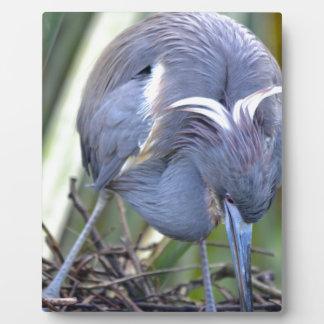 Heron Strengthening Her Nest Plaque