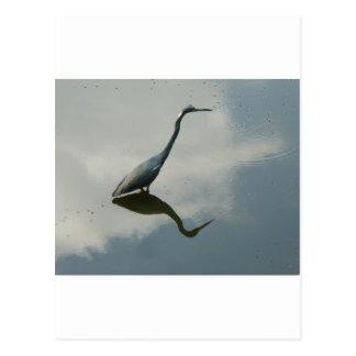 Heron thoughts postcard