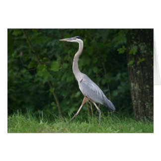 Heron Walk Card