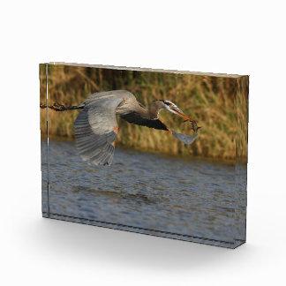 Heron with Fish Acrylic Award