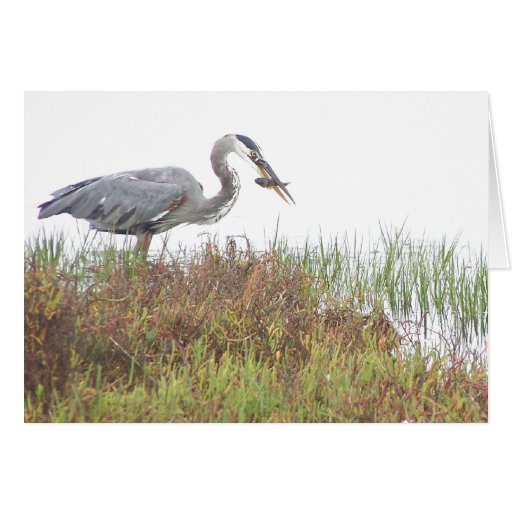 Heron with Fish Card