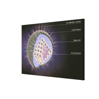 Herpes Virus Structure 2 Canvas Print