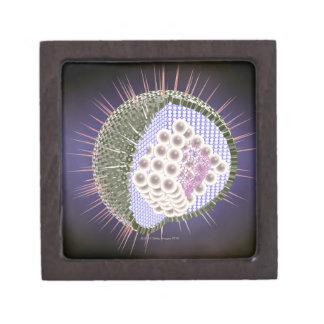 Herpes Virus Structure 2 Jewelry Box