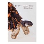 Herpetologist bilateral plantillas de tarjeta de negocio