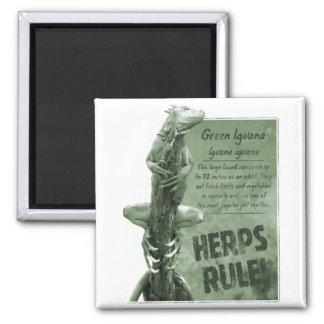 Herps Rule Iguana Magnet