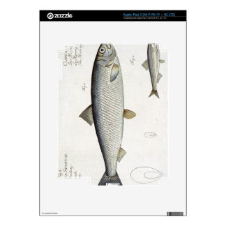 Herring (Clupea Harengus) (Fig. 1) and Sprat (Clup Decals For iPad 3