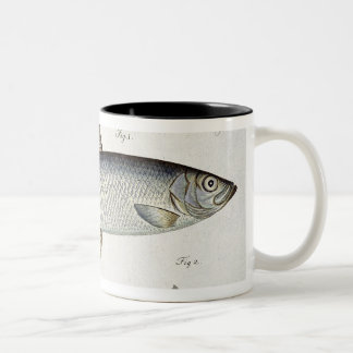 Herring (Clupea Harengus) (Fig. 1) and Sprat (Clup Two-Tone Coffee Mug