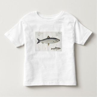 Herring (Clupea Harengus) (Fig. 1) and Sprat (Clup Toddler T-shirt