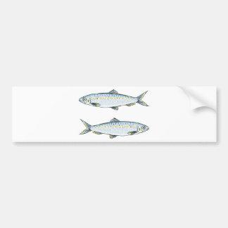 Herring Fish Sketch Bumper Sticker