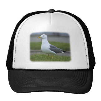 Herring Gull 8P91D-05 Mesh Hats