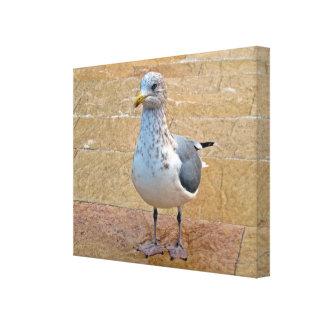 Herring Gull Canvas Print