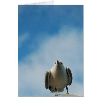 Herring Gull Card
