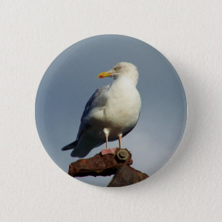 Herring Gull Charlestown Harbour Cornwall England Button