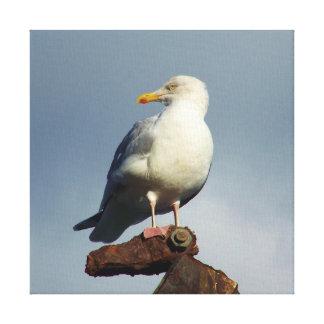 Herring Gull Charlestown Harbour Cornwall England Canvas Print