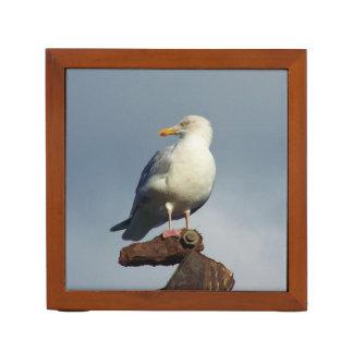 Herring Gull Charlestown Harbour Cornwall England Pencil Holder