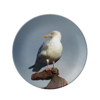 Herring Gull Charlestown Harbour Cornwall England Dinner Plate