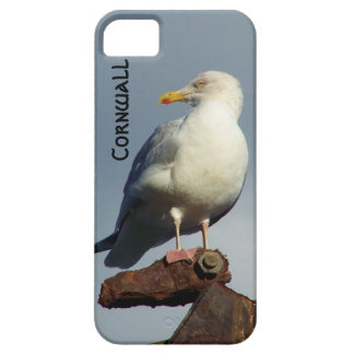 Herring Gull Charlestown Harbour Cornwall England iPhone SE/5/5s Case