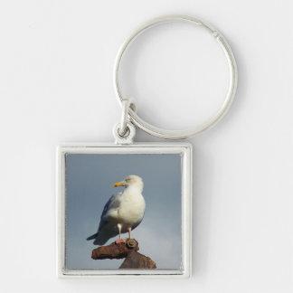 Herring Gull Charlestown Harbour Cornwall England Keychain
