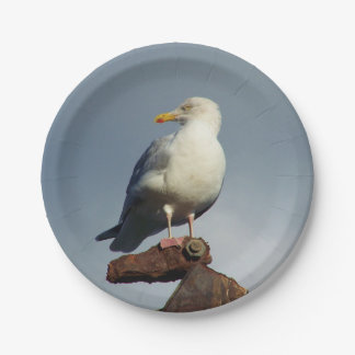 Herring Gull Charlestown Harbour Cornwall England Paper Plate