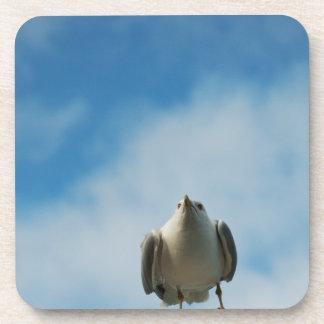Herring Gull Cork Coaster