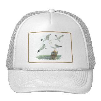 Herring Gull Hat