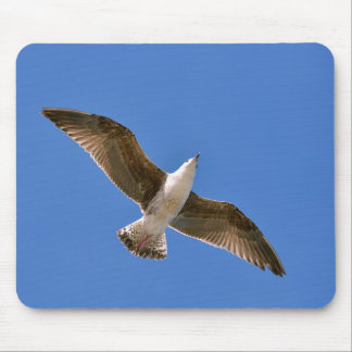 Herring gull in fly mouse pad