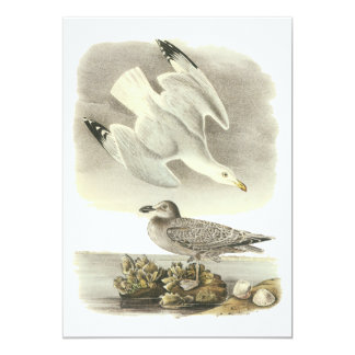 Herring Gull, John Audubon Card