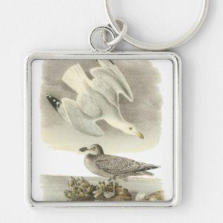 Herring Gull, John Audubon Keychain