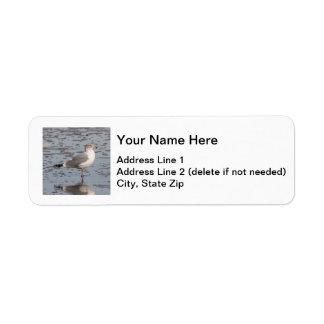 Herring Gull Return Address Label