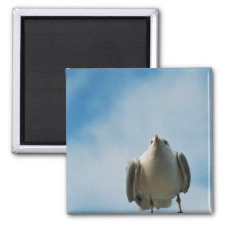 Herring Gull Magnet