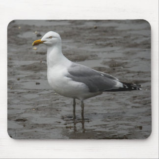 Herring Gull Mouse Pad