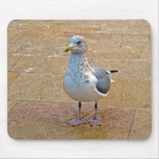 Herring Gull Mouse Pad
