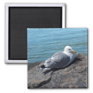 Herring Gull on Rock Jetty 2 Inch Square Magnet