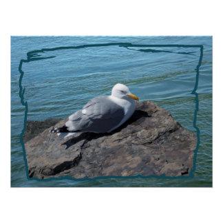 Herring Gull on Rock Jetty Poster