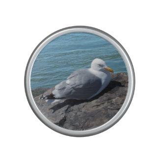 Herring Gull on Rock Jetty Speaker