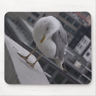 herring-gull on window mouse pad