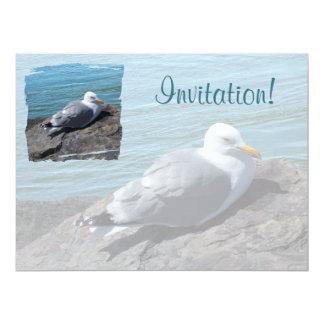 Herring Gull Resting on Rock Jetty: 6.5x8.75 Paper Invitation Card