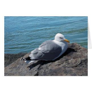 Herring Gull Resting on Rock Jetty: Greeting Card