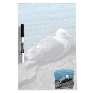 Herring Gull Resting on Rock Jetty: Dry-Erase Board