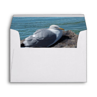 Herring Gull Resting on Rock Jetty: Envelope