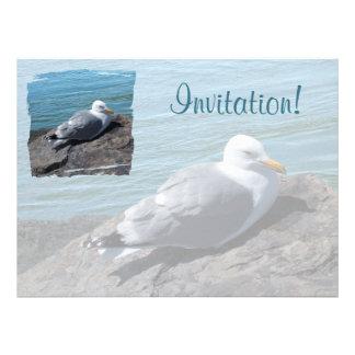 Herring Gull Resting on Rock Jetty: Custom Announcement
