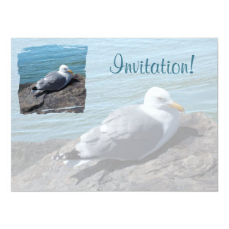 Herring Gull Resting on Rock Jetty: 6.5x8.75 Paper Invitation Card