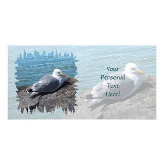 Herring Gull Resting on Rock Jetty: Photo Card