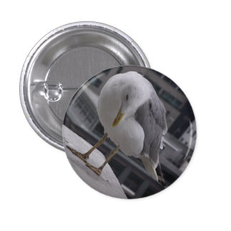 herring gull with background pin