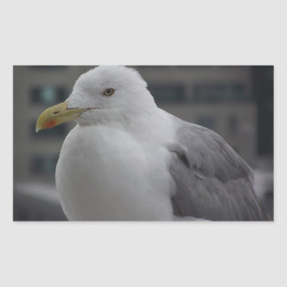 herring gull with background sticker
