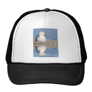 Herring gull with big reflection on water trucker hats